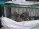 Intervinguts 28 ocells que s'estaven venent il·legalment